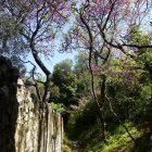 Côte d'Azur / Alpes-Maritimes / Parcs naturels départementaux / Espaces naturels protégés / Nice – Parc naturel départemental du Vinaigrier – Photo n° 04