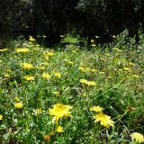 Côte d'Azur / Alpes-Maritimes (06) / Parcs naturels départementaux / Espaces naturels protégés / Nice – Parc du Vinaigrier – Photo n° 07