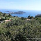 Côte d'Azur / Alpes-Maritimes (06) / Parcs naturels départementaux / Espaces naturels protégés / Nice – Parc du Vinaigrier – Photo n° 17