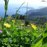 Côte d'Azur / Alpes-Maritimes (06) / Parcs naturels départementaux / Espaces naturels protégés / Parc de la Grande Corniche – Photo n° 05