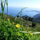 Côte d'Azur / Alpes-Maritimes (06) / Parcs naturels départementaux / Espaces naturels protégés / Parc de la Grande Corniche – Photo n° 06