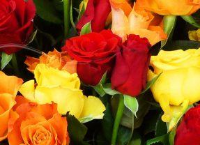 Le temps des Roses