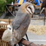 CÔTE D'AZUR / ALPES-MARITIMES / VILLAGES PERCHÉS / TOURRETTE-LEVENS (06690) / 10e Fête Médiévale de Tourrette-Levens – 2016 – Photo n° 13