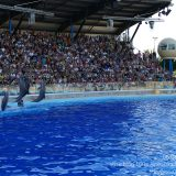 French Riviera / Côte d'Azur / Alpes-Maritimes / Antibes (06600) / Marineland – Parc d'Attraction de la Côte d'Azur – Photo n°20