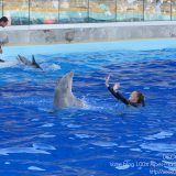 French Riviera / Côte d'Azur / Alpes-Maritimes / Antibes (06600) / Marineland – Parc d'Attraction de la Côte d'Azur – Photo n°21
