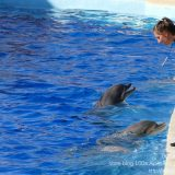 French Riviera / Côte d'Azur / Alpes-Maritimes / Antibes (06600) / Marineland – Parc d'Attraction de la Côte d'Azur – Photo n°22