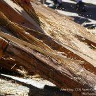 Alpes-Maritimes (06) / Arrière-Pays / Haute Vésubie / Saint-Martin Vésubie / Fête du Pain & des Métiers d'Antan – Battage et ventage du blé – Photo n°39