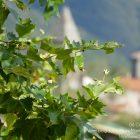 Alpes-Maritimes / Arrière-Pays / Utelle (06450) / Fêtes / Festivités / Monuments et Patrimoine – Village d'Utelle – Août 2016 – Photo n°33