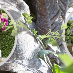 Visite Villa Domergue et ses jardins – Cannes