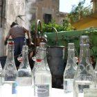 #CotedAzurNow / Alpes-Maritimes / Pays Mentonnais / Gorbio (06500) / Agenda événementiel / Festivités / Fête traditionnelle de La Branda – Branda 2016 – Photo n°26