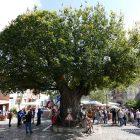 #CotedAzurNow / Alpes-Maritimes / Pays Mentonnais / Gorbio (06500) / Agenda événementiel / Festivités / Fête traditionnelle Gorbio – Branda 2016 – Photo n°3