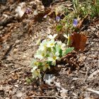 #Alpes-Maritimes (06) / Breil-sur-Roya – Sospel / Côté Nature / Outdoor / Randonnée / Mont Gros – Randonnée pédestre au départ du Col de Brouis – Photo n°15
