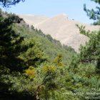 #Alpes-Maritimes (06) / Breil-sur-Roya – Sospel / Côté Nature / Outdoor / Randonnée / Mont Gros – Randonnée pédestre au départ du Col de Brouis – Photo n°19