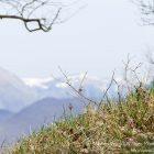 #Alpes-Maritimes (06) / Breil-sur-Roya – Sospel / Côté Nature / Outdoor / Randonnée / Mont Gros – Randonnée pédestre – Photo n°26