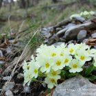 #Alpes-Maritimes (06) / Breil-sur-Roya – Sospel / Côté Nature / Outdoor / Randonnée / Mont Gros – Randonnée pédestre – Photo n°45
