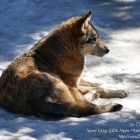 #CotedAzurNow / Alpes-Maritimes (06) / Saint-Martin-Vésubie / Le Boréon / Parc Alpha – Parc animalier – Pensez Boréon ! Vivez Alpha – Photo n°26