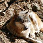 #CotedAzurNow / Alpes-Maritimes (06) / Saint-Martin-Vésubie / Le Boréon / Parc Alpha – Parc animalier – Pensez Boréon ! Vivez Alpha – Photo n°32
