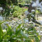 #CotedAzurFrance / Alpes-Maritimes (06) / Nice / Parcs & Jardins / Jardin Botanique de la Ville de Nice – Corniche Fleurie – Botanical Garden of Nice – Photo n°11