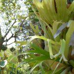 #CotedAzurFrance / Alpes-Maritimes (06) / Nice / Parcs & Jardins / Jardin Botanique de la Ville de Nice – Corniche Fleurie – Botanical Garden of Nice – Photo n°12