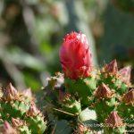 #CotedAzurFrance / Alpes-Maritimes (06) / Nice / Parcs & Jardins / Jardin Botanique de la Ville de Nice – Corniche Fleurie – Botanical Garden of Nice – Photo n°15