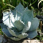 #CotedAzurFrance / Alpes-Maritimes (06) / Nice / Parcs & Jardins / Jardin Botanique de la Ville de Nice – Corniche Fleurie – Botanical Garden of Nice – Photo n°16