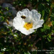 #CotedAzurFrance / Alpes-Maritimes (06) / Nice / Parcs & Jardins / Jardin Botanique de la Ville de Nice – Corniche Fleurie – Botanical Garden of Nice – Photo n°18