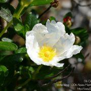 #CotedAzurFrance / Alpes-Maritimes (06) / Nice / Parcs & Jardins / Jardin Botanique de la Ville de Nice – Corniche Fleurie – Botanical Garden of Nice – Photo n°19