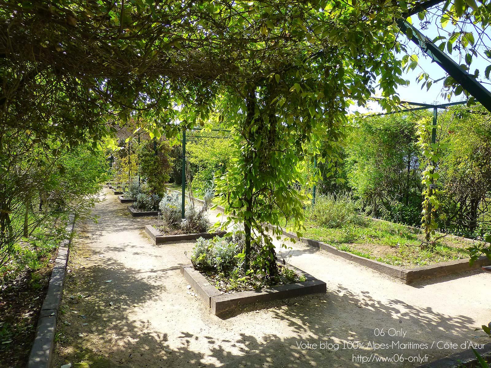 Jardin botanique de la ville de nice guide touristique for Jardin botanique nice