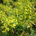 #CotedAzurFrance / Alpes-Maritimes (06) / Nice / Parcs & Jardins / Jardin Botanique de Nice – Corniche Fleurie – Botanical Garden of Nice – Photo n°28