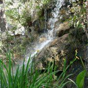 #CotedAzurFrance / Alpes-Maritimes (06) / Nice / Parcs & Jardins / Jardin Botanique de la Ville de Nice – Corniche Fleurie – Botanical Garden of Nice – Photo n°5