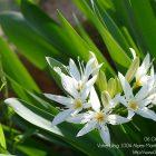 #CotedAzurFrance / Alpes-Maritimes (06) / Nice / Parcs & Jardins / Jardin Botanique de la Ville de Nice – Corniche Fleurie – Botanical Garden of Nice – Photo n°9