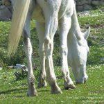 #FrenchMerveilles / Région PACA / Côte d'Azur / Alpes-Maritimes (06) / Pays Côtier / Sainte-Agnès / Côté Nature / Outdoor / Randonnée / Pointe Siricocca – Photo n°24