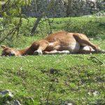 #FrenchMerveilles / Région PACA / Côte d'Azur / Alpes-Maritimes (06) / Pays Côtier / Sainte-Agnès / Côté Nature / Outdoor / Randonnée / Pointe Siricocca – Photo n°25