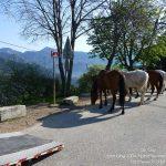 #FrenchMerveilles / Région PACA / Côte d'Azur / Alpes-Maritimes (06) / Pays Côtier / Sainte-Agnès / Côté Nature / Outdoor / Randonnée / Pointe de Siricocca – Photo n°8