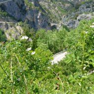 Le pont au loin –  Aiglun