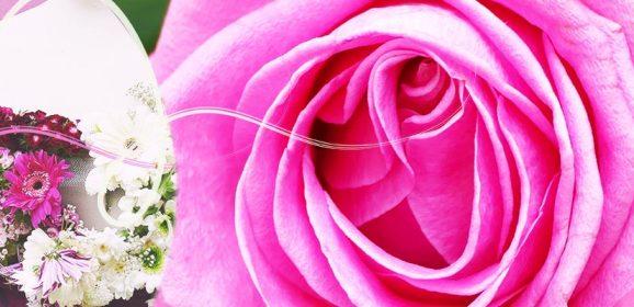 Autour de la Rose 2017 – La Colle-sur-Loup