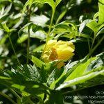 #CotedAzurFrance / Alpes-Maritimes (06) / Gattières / Visites & Découvertes  / Parcs & Jardins / Jardin des fleurs de poterie – Labellisé Jardin remarquable – Photo n° 27