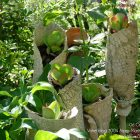 #CotedAzurFrance / Alpes-Maritimes (06) / Gattières / Visites & Découvertes  / Parcs & Jardins / Jardin des fleurs de poterie – Labellisé Jardin remarquable – Photo n° 29
