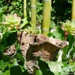 #CotedAzurFrance / Alpes-Maritimes (06) / Gattières / Visites & Découvertes  / Parcs & Jardins / Jardin des fleurs de poterie – Labellisé Jardin remarquable – Photo n° 30
