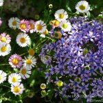 #CotedAzurFrance / Alpes-Maritimes (06) / Gattières / Visites & Découvertes  / Parcs & Jardins / Jardin des fleurs de poterie – Labellisé Jardin remarquable – Photo n° 38