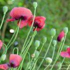#CotedAzurFrance / Alpes-Maritimes (06) / Gattières / Visites & Découvertes  / Parcs & Jardins / Jardin des fleurs de poterie – Labellisé Jardin remarquable – Photo n° 39