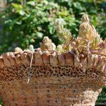 #CotedAzurFrance / Alpes-Maritimes (06) / Gattières / Visites & Découvertes  / Parcs & Jardins / Jardin des fleurs de poterie – Labellisé Jardin remarquable – Photo n° 41