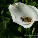 #CotedAzurFrance / Alpes-Maritimes (06) / Gattières / Visites & Découvertes  / Parcs & Jardins / Jardin des fleurs de poterie – Labellisé Jardin remarquable – Photo n° 60