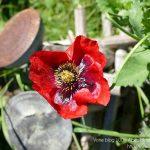 #CotedAzurFrance / Alpes-Maritimes (06) / Gattières / Visites & Découvertes  / Parcs & Jardins / Jardin des fleurs de poterie – Labellisé Jardin remarquable – Photo n° 68