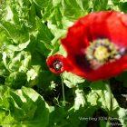 #CotedAzurFrance / Alpes-Maritimes (06) / Gattières / Visites & Découvertes  / Parcs & Jardins / Jardin des fleurs de poterie – Labellisé Jardin remarquable – Photo n° 71