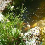 #CotedAzurFrance / Alpes-Maritimes (06) / Gattières / Visites & Découvertes  / Parcs & Jardins / Jardin des fleurs de poterie – Labellisé Jardin remarquable – Photo n° 81