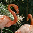 #CotedAzurFrance / Alpes-Maritimes (06) / Nice / Parcs & Jardins / Visite du Parc Phoenix Nice. Vivez toutes les couleurs de la nature !  – Photo n°2