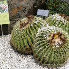 #CotedAzurFrance / Alpes-Maritimes (06) / Nice / Parcs & Jardins / Visite du Parc Phoenix à Nice. Vivez toutes les couleurs de la nature ! – Photo n°31