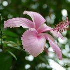 #CotedAzurFrance / Alpes-Maritimes (06) / Nice / Parcs & Jardins / Visite du Parc Phoenix à Nice. Vivez toutes les couleurs de la nature ! – Photo n°33