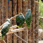#CotedAzurFrance / Alpes-Maritimes (06) / Nice / Parcs & Jardins / Visite du Parc Phoenix à Nice. Vivez toutes les couleurs de la nature ! – Photo n°79